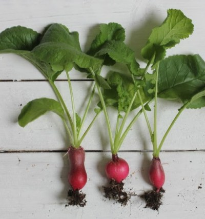 radishes, grow a vegetable container garden