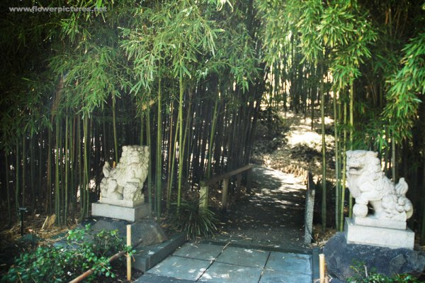 japanese gardens with bamboo Discuss Asian garden landscaping ideas ~ Yard garden
