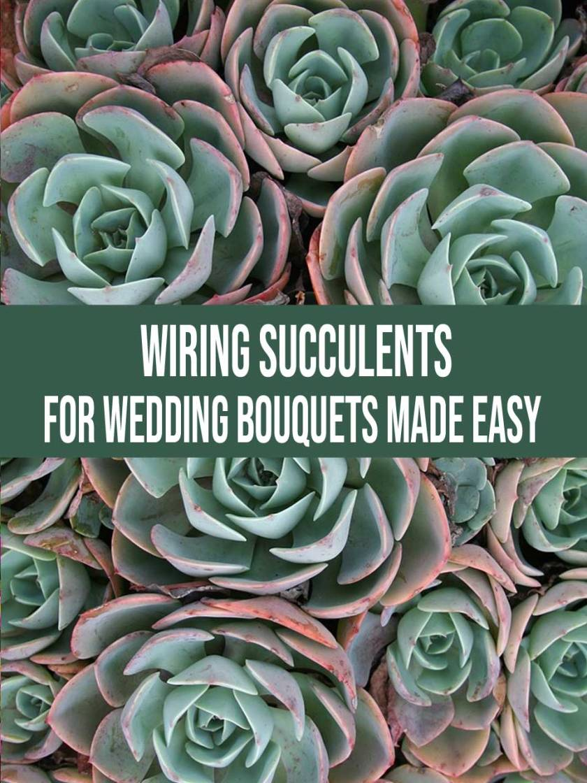 Wiring succulents how to wire succulents for wedding bouquets wiring succulents izmirmasajfo