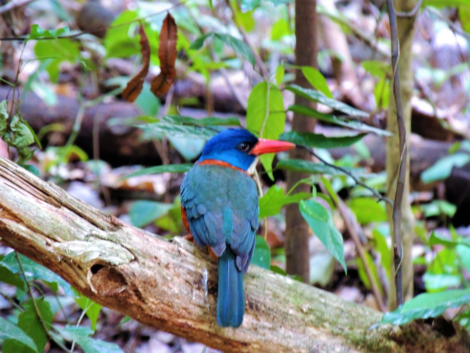 Tangkoko Nature Reserve