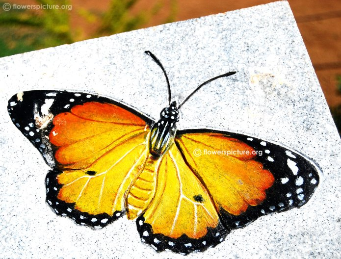 Srirangam Butterfly Park Trichy Butterfly Park