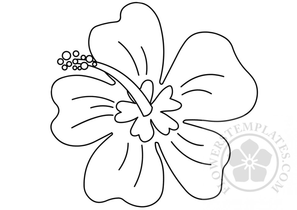 Drawing Hawaiian Flower Coloring Page Flowers Templates