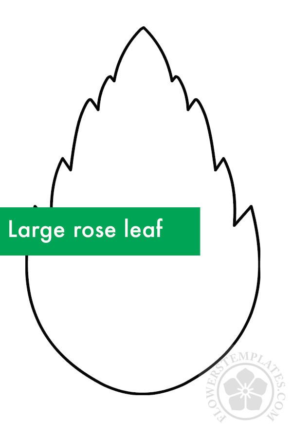 Large rose leaf