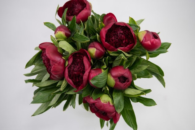 Flowers WA Perth - Peony - Peony - Red Charm
