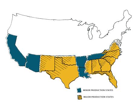 Where Peanuts Grow Florida Peanut Producers
