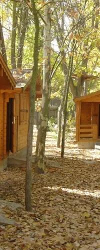 Campamento Bilingüe Inglés Verano