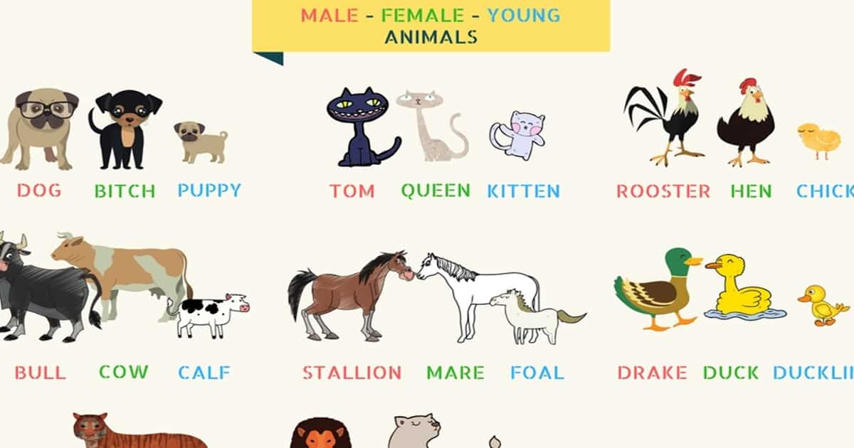 Cartoons Opposite Gender