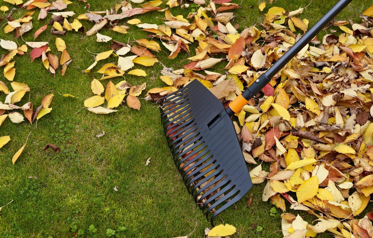 What Do Leaves After Raking