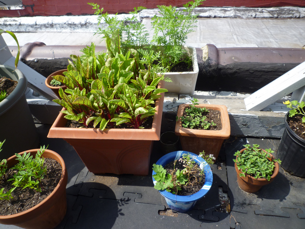 Flux Rooftop Garden 2011