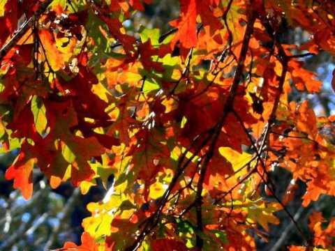Sposób na jesienną chandrę