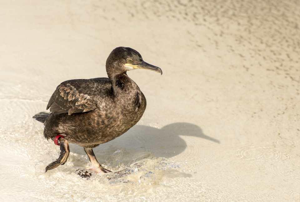 Kaczuszka na plaży