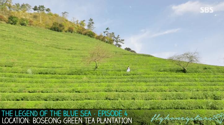 legend-of-blue-sea-boseong-green-tea