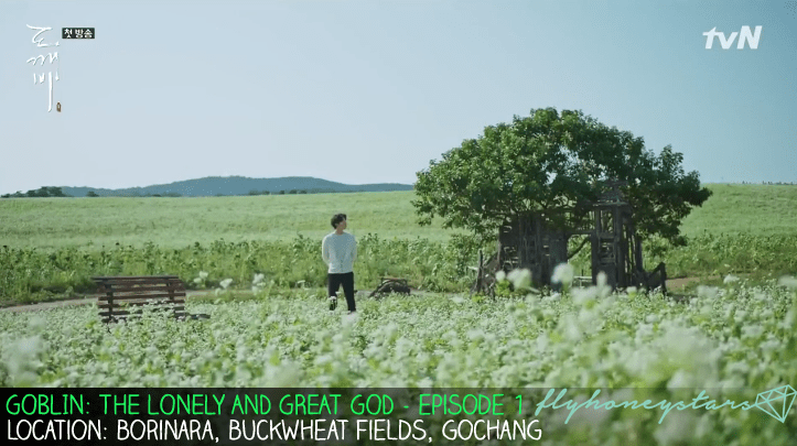 goblin-drama-location-borinara-buckwheat-white-flowers-field-gochang