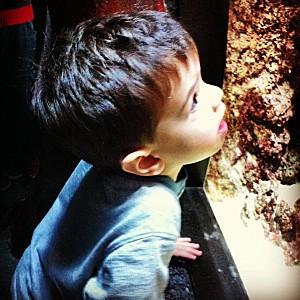 enfant émerveillé aquarium