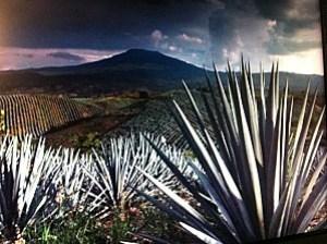 musee-de-la-tequila 3499