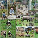 Plus qu'un zoo, Beauval