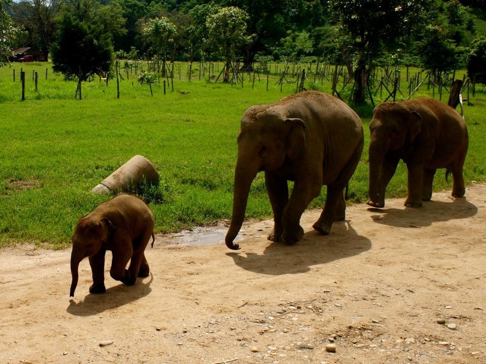 Baby olifantjes Chiang Mai