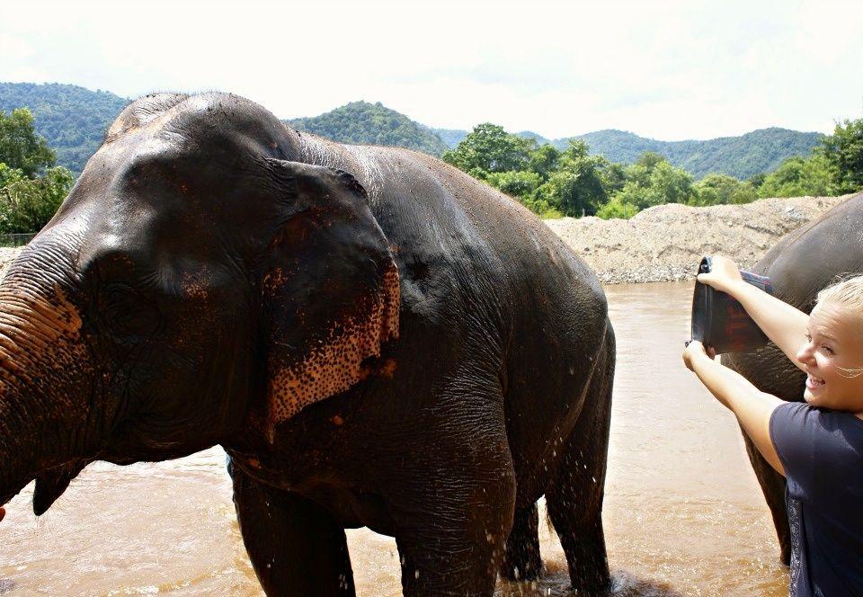 Hotspot Chiang mai olifanten opvang
