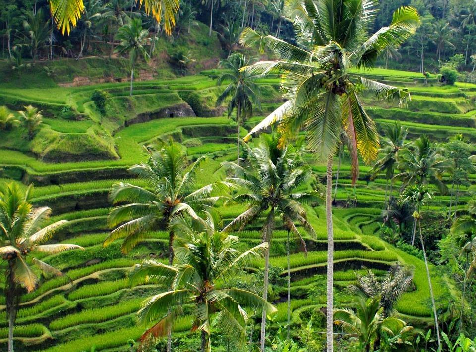 Tegalalang Rice Terrace Ubud Bali Reisverslag Bali