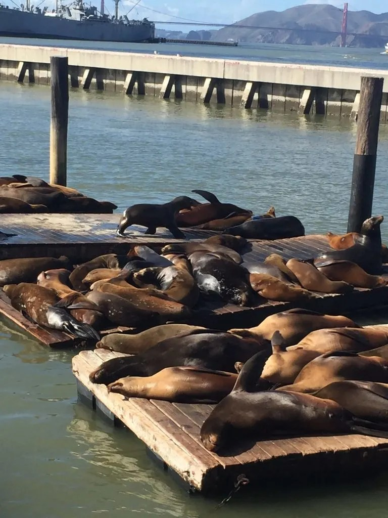 San Francisco With Kids. San Francisco With Kids: Kid Friendly Attractions in San Francisco for 2017. Up to date indoor and outdoor activities for children of all ages. Pier 39, sea lions