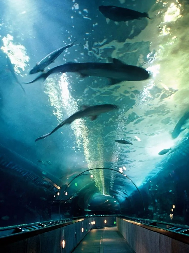 San Francisco With Kids. San Francisco With Kids: Kid Friendly Attractions in San Francisco for 2017. Up to date indoor and outdoor activities for children of all ages. Aquarium of the bay