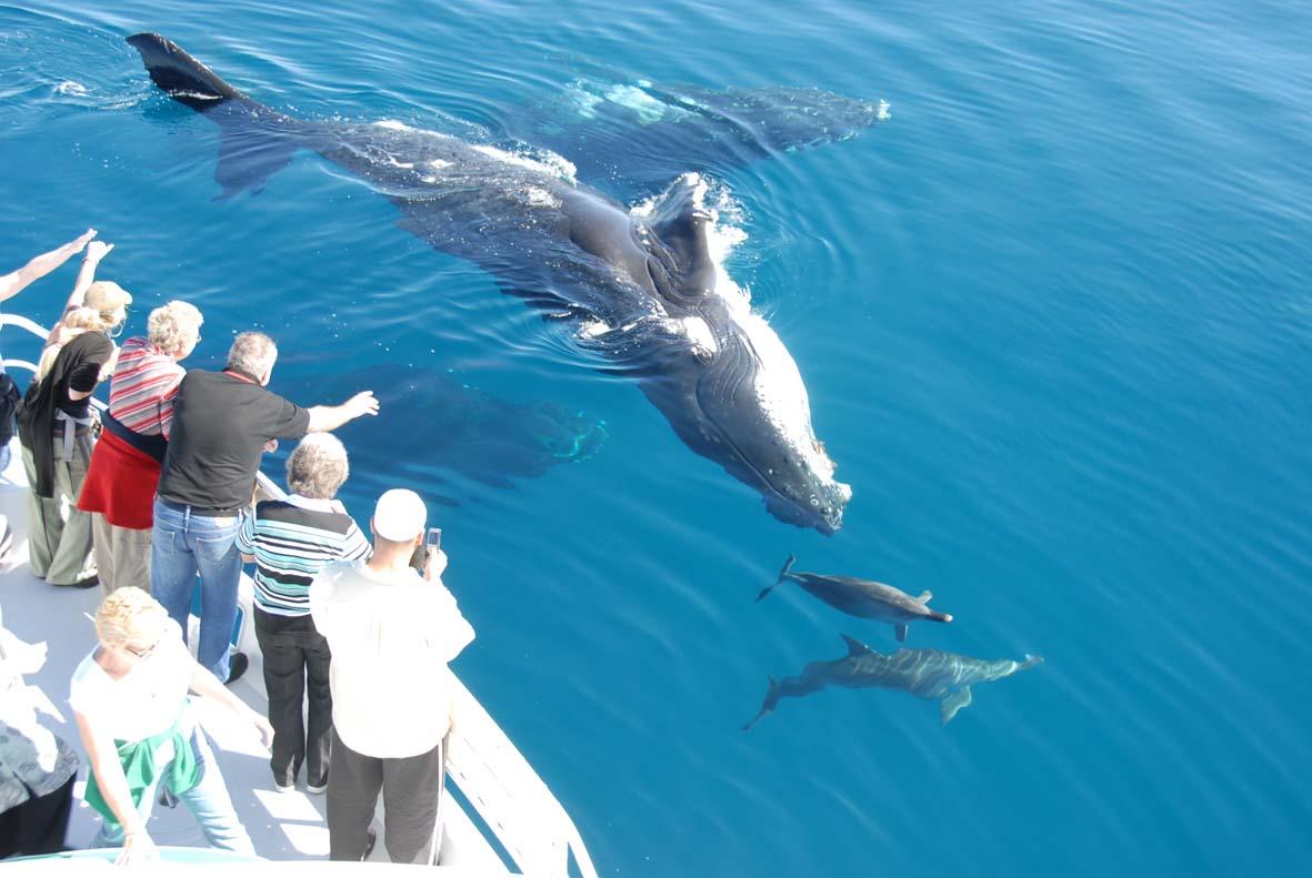 Dolphin Watching Flyopedia Blog