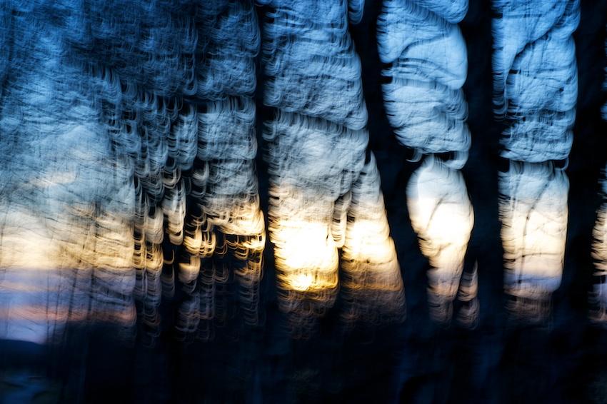 Sonnenuntergang durch die Bäume - kreiselndes Panning    Foto: © Ulf Cronenberg, Würzburg