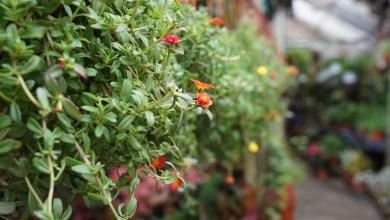 piante in vaso in un vivaio, a proposito di smart agricolture
