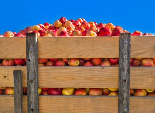 Food waste spotlight falls firmly on farms