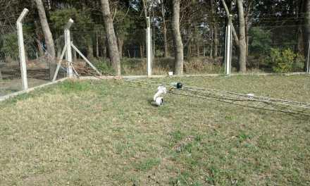 Caballos provocan daños en instalaciones del Corralón Municipal de Deheza