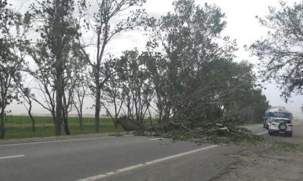 Árbol caído sobre Ruta Nacional 158