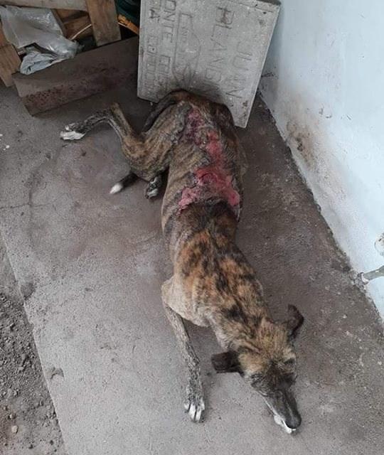 Una mujer arrojó agua hirviendo a un perro y fue denunciada