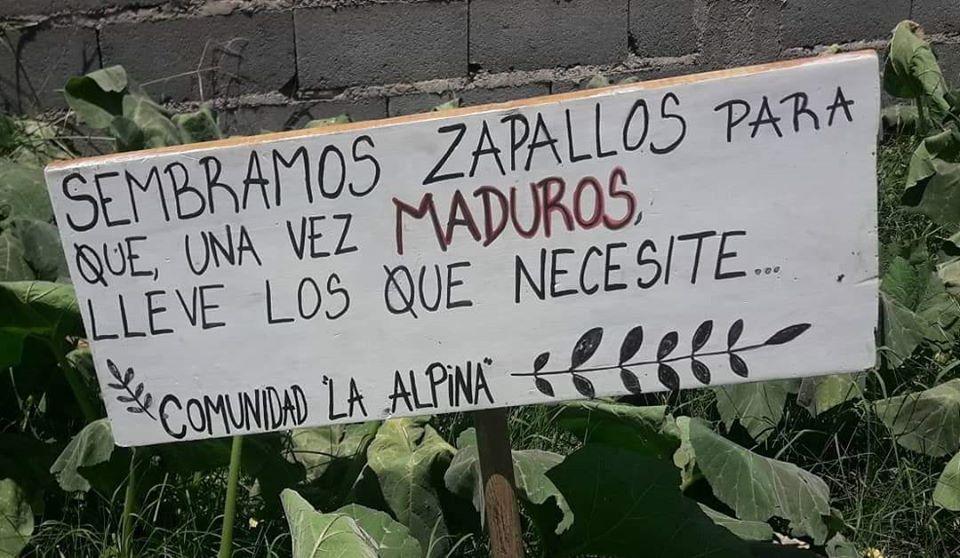 Pequeña comunidad de jóvenes apuesta al crecimiento de «Huertas comunitarias»