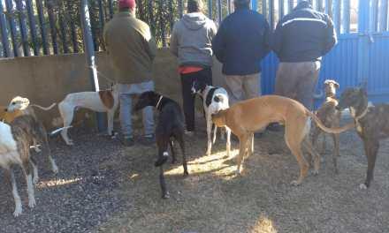 Deheza: Circulaban en zona rural con perros galgos, fueron detenidos