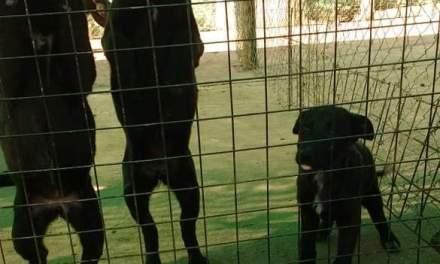 Colitas Felices pide colaboración para la compra de pipetas para perritos del Refugio