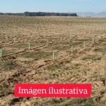 Forestación y parquización en el predio del viejo Basural