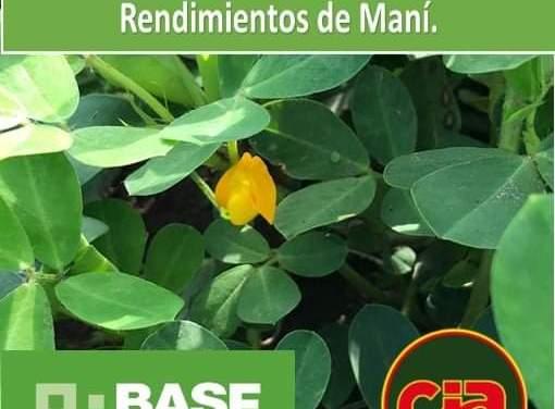 «Apertura de inscripciones para la 24° edición de Concurso de Máximos Rendimientos en Maní»