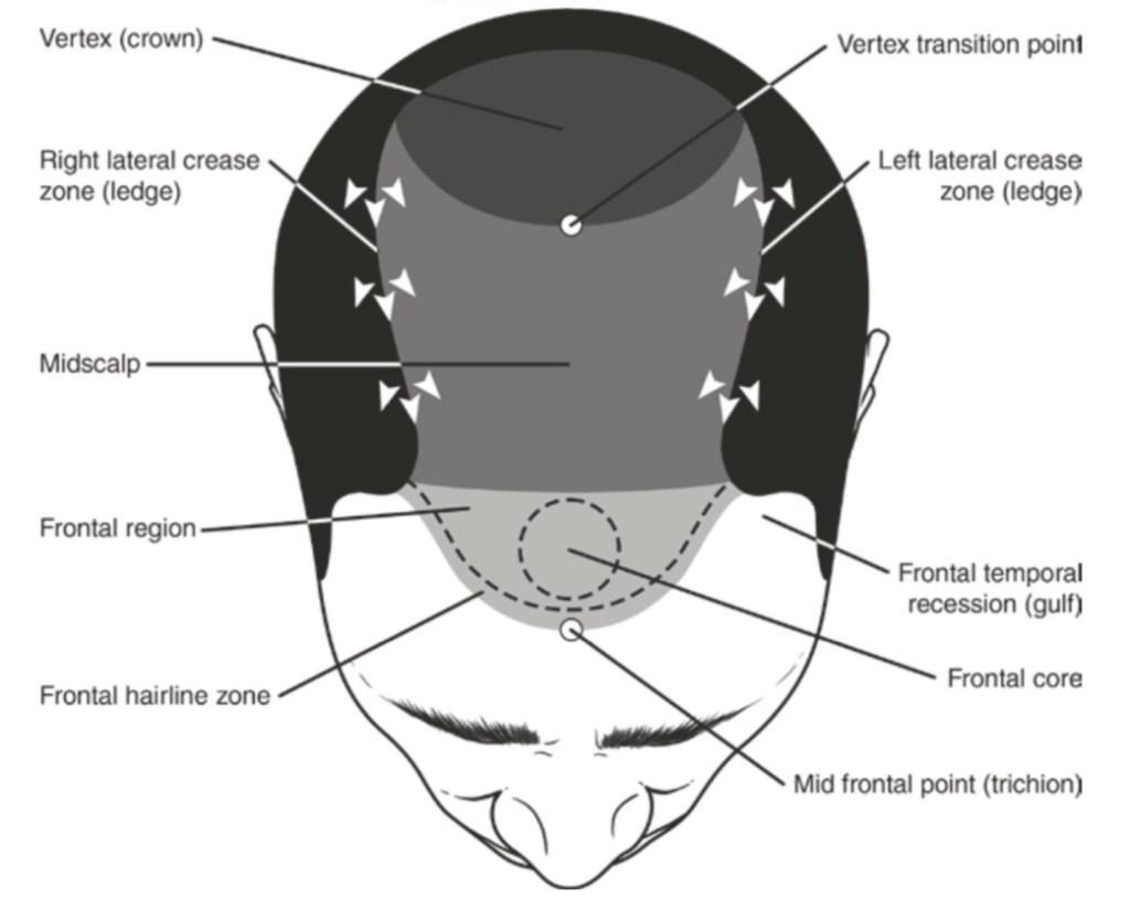 skin covering the skull