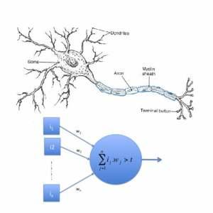 Delphi XE5 Firemonkey Neural Network Neuron