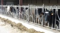 Pour avoir confondu industrialisation avec compétitivité, l'élevage français s'enlise dans une crise chronique. FNE Pays de la Loire rappelle l'importance d'une vision à long terme pour l'élevage français. Il faut […]