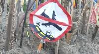 Contre toute attente, la Justice n'a pas suivi les conclusions du rapporteur public qui demandait l'annulation de quatre arrêtés préfectoraux permettant le démarrage des travaux pour l'aéroport de Notre-Dame-des-Landes. FNE […]