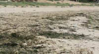 Le préfet de région a adopté le 24 juin 2014 le programme régional de lutte contre la pollution des eaux par les nitrates d'origine agicole. En instaurant un dispositif d'une […]