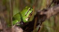 La région Pays de la Loire a adopté le 26 juin 2014 sa nouvelle politique régionale en faveur de la biodiversité pour la période 2014-2016. Le CESER des Pays de […]