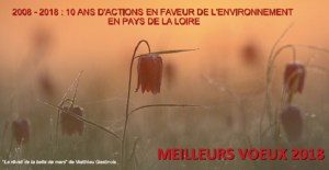 Crédit Photo : Matthieu Gastinois - Le réveil de la belle de mars