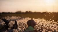 Le gouvernement a lancé une consultation publique de trois semaines, sur deux projets de texte (décret et arrêté) visant à protéger les personnes exposées aux épandages de pesticides à proximité […]