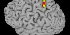 دراسة جديدة في علاج الاصابة بالشلل بمختبر ريتشارد أندرسون