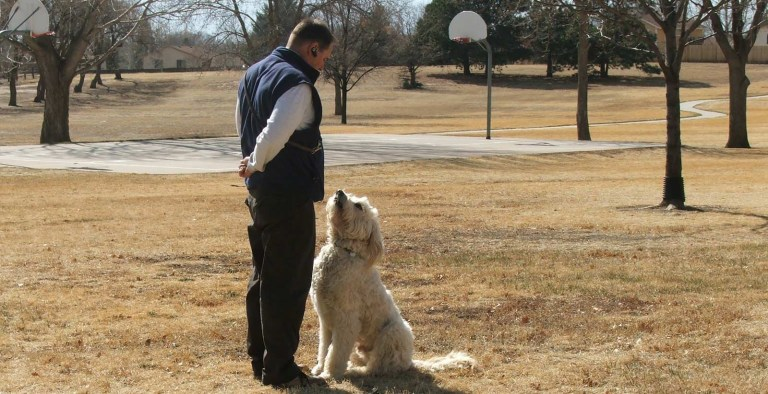 Why Dog Trainers Are Successful in Dog Training