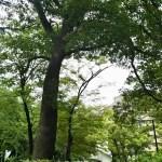 赤羽公園の木々