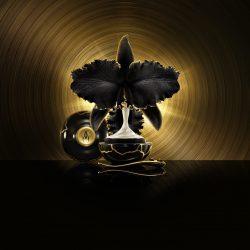orchidée impériale/Focus Magazine