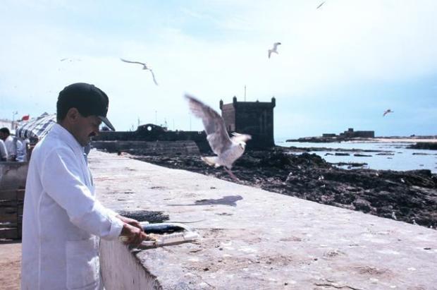 Fisherman in Essaouira, Morocco. Ph. Silvia Dogliani